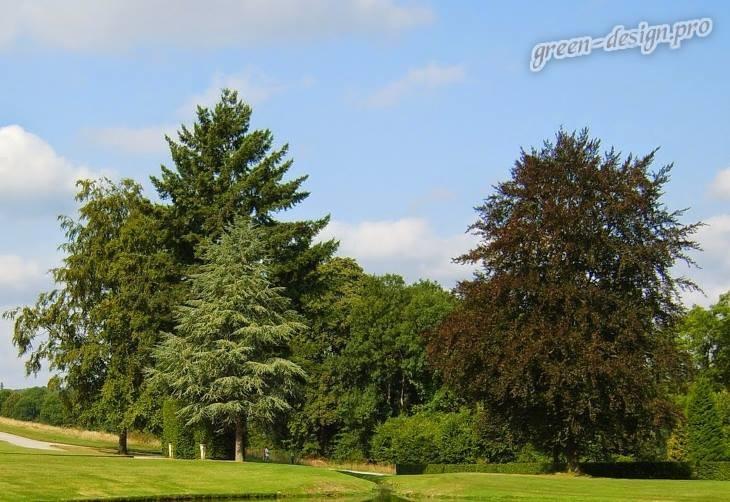 Идеи использования быстрорастущих деревьев